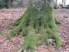 Ausgreifende Bäume